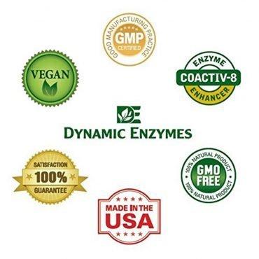logos_dynamicEnzymes